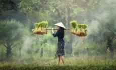 徐文兵:中医食疗的本质是什么?